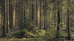 Spring Lights (Netsrak) Tags: baum bäume wald forst eifel natur landschaft