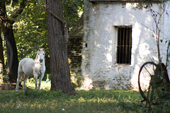 Ventana rural (Letua) Tags: ventana rural caballo window horse crazytuesdaytheme 7dwf crazywindows
