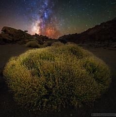 Deep Color (Stefan Liebermann) Tags: nature landscape panorama plant plants pflanze natur landschaft tenerife teneriffa spanien spain outdoor travel sky himmel night nacht milchstrase galaxie galaxy astronomy space milkyway langzeitbelichtung longexposure light licht