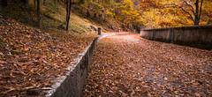 Foliage (SDB79) Tags: autunno foglie foliage strada rosso parco parconazionaleabruzzo bosco sottobosco abruzzo civitella alfedena
