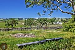 Central California Coast Wine Country (randyandy101) Tags: californiacentralcoast california pasorobles highway46 vines vineyards vista view wine winecountry winery oaks trees farm farming family bluesky