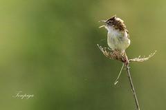 esisto anche iO (Tonpiga) Tags: tonpiga uccelliinlibertà faunaselvatica micro macro