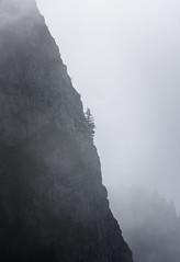 On The Border (Alieno95) Tags: monte guglielmo corno del bene brescia provincia zone lago lake iseo prealpi bresciane albero tree roccia rock lombardia dettagli details nebbia fog autunno autumn 2016 memories