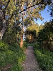 Ulistac Natural Area (mishq00) Tags: ulistacnaturalarea santaclara california