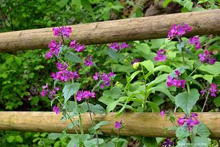 Pretty wild flowers - HFF!