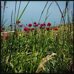 2014-06-22-0111.jpg (Fotorob) Tags: water engeland kust planten isleofwight england freshwater