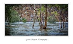 Flooded Avon River (Tartan Ranga) Tags: river flood australian bush