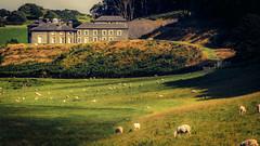 Aberystwyth LXI (rodriguesfhs) Tags: wales cymru welsh aberystwyth sheep fields house landscape grass