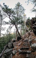 steps to ascend (almostsummersky) Tags: stone rocks hike pine steps winter rankinridgenaturetrail forest lichen trail blackhills tree southdakota windcavenationalpark stones rankinridge custer unitedstates us nationalpark