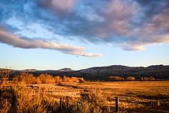 Feelin' good (Jessie T*) Tags: kamloopsbc canada settingsun birds sky clouds cattle goldenlight fence ranch cans2s