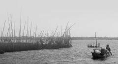 A man rows a boat in the Mekong River (Sông Mê Kông) (C. Alice) Tags: boat river people bw blackwhite vietnam nikonp300 nikon 2014 p300 travel asia favorites50