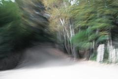 c a l l e j a (creonte05) Tags: explore eduardomiranda nikon d7100 flickr 2017 chile curico blur color trees arbol calle callejon sombra verde natural green icm