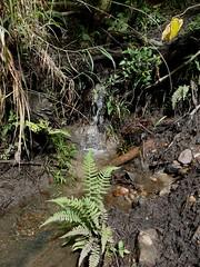 small creek at kumul lodge (Pete Read) Tags: small creek kumul lodge papau new guinea mount hagen