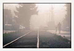 8 a.m. (chickentender™ (Eyewanders Foto)) Tags: 2009 ballard ballardlocks bike earlymorning eyewandersfoto fogrollsinandout foggy haze lines lot oldtracks pentaxda50135mmf28 pentaxk7 rails revisits revisting tracks traintracks tree