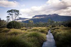 Overland Track, Tasmania (lea.maguero) Tags: tasmania overland track hiking cradle mountain australia trek