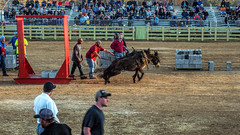 Brave Hearts (TuthFaree) Tags: elements mule team pulling contest tn columbia muledays