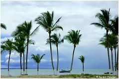 Coroa Vermelha - La plage. (gerard21081948) Tags: brésil brasil coroavermelha santacruzcabralia plage palmiers cocotiers mer bleue océan tropical sable ciel bahia