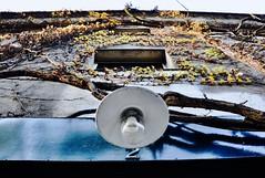 N°2 (Yvan S) Tags: lamp lampe street alley ruelle rue paris plantes lumière couché soleil grimpantes climbing plants facade façade blue bleu lierre ivy windows sunset nikon d90