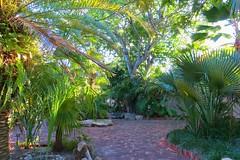 Key West (Florida) Trip 2016 2060Rif 4x6 (edgarandron - Busy!) Tags: florida keys floridakeys keywest library plants