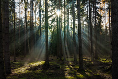 Divine (Petr Sýkora) Tags: les paprsky podzim nature forest sunrays light trees serene place sanctuary czech