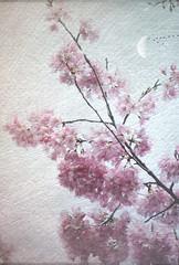Sakura series (Nick Kenrick..) Tags: sakura blossoms moon fisgardstreet chinatown