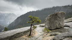 A rock, a tree and a waterfall (Images by William Dore) Tags: california usa yosemite nikon nikond810 rain nationalpark landscape outside outdoors trees granite waterfall yosemitenationalpark