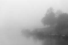 morning quietude... (Vladimir Barvinek) Tags: mist river swan fog exe tree flow water morning quietude calm reflection blackandwhite