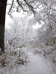 IMG_2832 (sjj62) Tags: s90 snow snowscape lith lakeinthehillsil winter winterscape