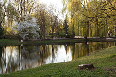 DSC08000 (igor_shumega) Tags: природа пейзаж парк вода озеро весна отдых прогулки дизайн дерево