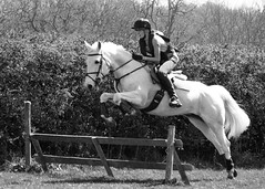 Jumping White Beauty (stobinphotos) Tags: horse jump jumping bw action