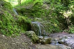 DSC_2625 (oria77) Tags: dolina bolechowicka krakow valley woodland poland