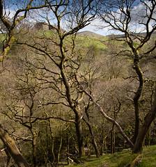 1920p 72dpi-7082 (reach.richardgibbens) Tags: bowland lancashire england uk littledale fell moorland moor valley dale
