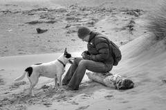 Down the beach (skullwull) Tags: dog dogs mutt beach