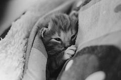 Okanagan Animal Shelter - Critteraid (Critteraid) Tags: penticton spca animals cats dogs shelter rescue okangan
