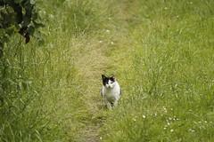 _MG_6119 (Pablo Alvarez Corredera) Tags: burro gato gata gallina rural medio vida hierba alta pradera praderio espigas arbol arboles burrito orejas orejitas gatita
