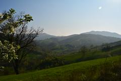 colline in primavera (kyry2010) Tags: colline vezzano sul crostolo reggio emilia landscape paesaggio panorama landschaft verde green primavera spring springtime