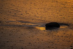 Washed up.... (Joe Hengel) Tags: danapoint darkness stone socal southerncalifornia sunset sea seaside seashore sand goldenstate theoc orangecounty oc outdoor beach beachocean capobeach capistranobeach rock evening eveninglight washedup