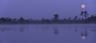 Moonset on a Foggy Morning