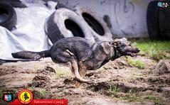 2017_04_22_ Qna _OSP Kęty Dzień psa ratowniczego_0108
