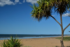 Moore Park Beach (Dreaming of the Sea) Tags: bluesky beach sand ocean coralsea mooreparkbeach pandanuspalm bundaberg april 2017 australia nikon d5500 nikkor18200mm tropical sea coast water sky topf25 500v20f 7dwf
