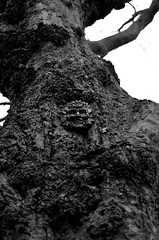 P52 Week 16 | Unexpected (Steph*Powell) Tags: tree park nature face meersbrookpark sheffield 50mm nikond5100 monochrome blackwhite