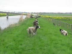 IMG_8397 (kassandrus) Tags: hiking wandelen netherlands nederland struinenenvorsen oude hollandse waterlinie