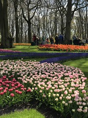 Keukenhof - Tulip Gardens (darrenboyj) Tags: keukenhof people attraction garden flowerbed flower tulip tulips spring netherlands holland event yearly