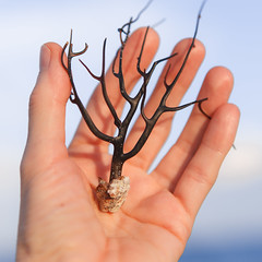 black coral (lemank) Tags: beach coral self afternoon hand