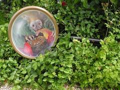 Museaux et dlices (Pierre Marcel) Tags: art installation franais fraise groin vexin paraboles aventureland biodiversit pierremarcel museaux entourloupe
