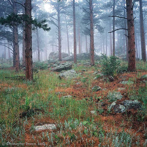 Photo - Misty forest in the foothills.