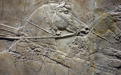 Lion Hunts of Ashurbanipal, bridle tightened