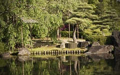 Nirvana (gracemwlau) Tags: trees plants nature water beautiful beauty japan reflections garden asian japanese asia wildlife bonsai forests