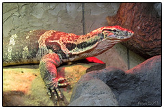 Monitor (Little Alicia) Tags: ontario canada nature animal zoo reptile lizard vaughan reptilia littlealicia canonpowershotelph100hs