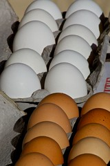 Eggs (WissPix) Tags: light shadow brown contrast rows eggs whit